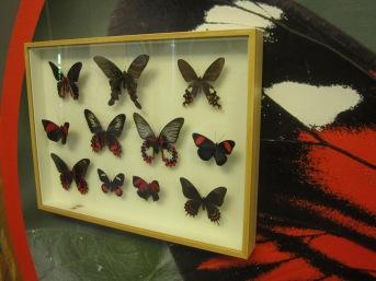 Farfalle rosse